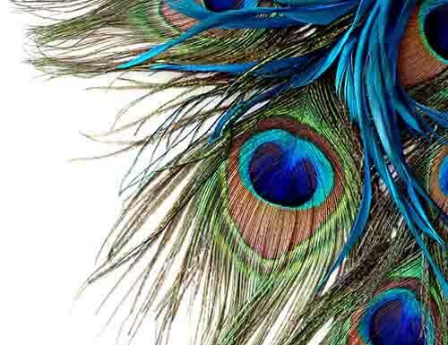 Kolorwala Design (123)